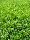 Première herbe Photos stock