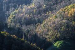 Première lumière sur la forêt Photo stock