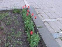 Première nature de fleurs de ressort autour de nous