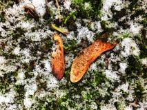 Première neige photos libres de droits