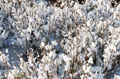 Première neige images libres de droits