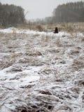 Première neige Image libre de droits