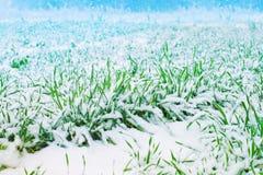 Première neige Image stock