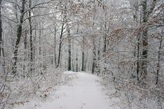 Première neige Images stock
