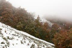 Première neige d'automne Photographie stock