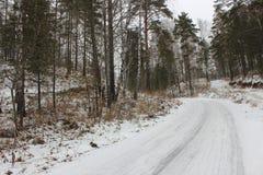Première neige dans la forêt Photos libres de droits