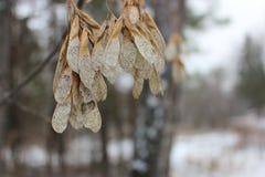 Première neige dans la forêt Image stock