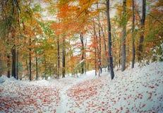 Première neige dans la forêt de montagne Photos stock