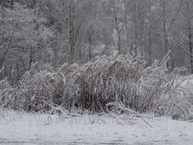 Première neige, Nice vue sur le chemin de marche étroit en automne Photographie stock
