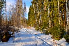 Première source dans la forêt Photos libres de droits