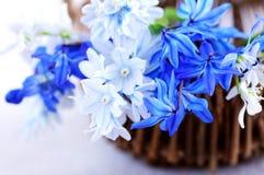 première source de fleurs Photo stock