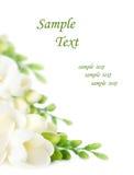 première source de fleurs Image stock