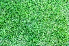 Première vue d'herbe verte Photographie stock
