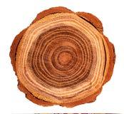 Première vue d'un tronçon d'arbre image libre de droits