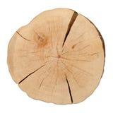 Première vue d'un tronçon d'arbre photographie stock libre de droits