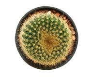 Première vue de cactus Images libres de droits