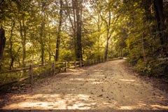 Première vue de personne de chemin de saleté dans la forêt Photographie stock