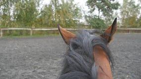Première vue de personne de monter un cheval Point de vue de cavalier marchant à l'étalon Fin de POV vers le haut de mouvement le clips vidéos