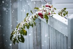 Premières chutes de neige Photo libre de droits