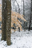 Premières chutes de neige Image libre de droits