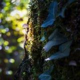 Premières feuilles d'automne sur la balustrade images stock