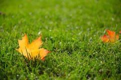 Premières feuilles de chute Photo libre de droits