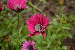 Premières fleurs Photographie stock libre de droits
