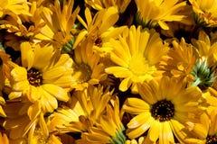 Premières fleurs de ressort, lumière du soleil Photo stock
