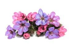 Premières fleurs de ressort sur le blanc Photographie stock