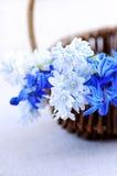 Premières fleurs de source Photos libres de droits