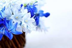 Premières fleurs de source Image libre de droits