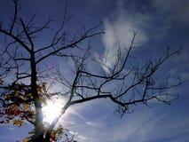 Premier arbre d'automne et soleil et ciel bleu Photo stock