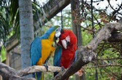 Premier baiser Images libres de droits
