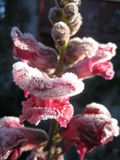 Premier gel Photos stock