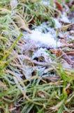 Premier gel d'automne. Photo stock