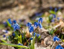Premier mois de fleur-mars de ressort Images stock