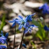 Premier mois de fleur-mars de ressort Images libres de droits