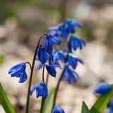 Premier mois de fleur-mars de ressort Photographie stock