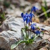 Premier mois de fleur-mars de ressort Photographie stock libre de droits