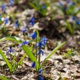 Premier mois de fleur-mars de ressort Photos libres de droits