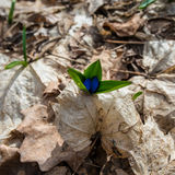 Premier mois de fleur-mars de ressort Photos stock