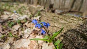 Premier mois de fleur-mars de ressort Photo stock