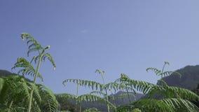 Premier plan d'usine du ciel bleu Photos libres de droits