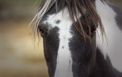 Premier plan du regard étonnant d'un poney de peinture photos libres de droits