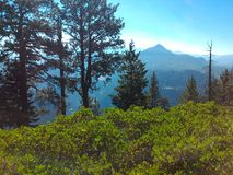 Premier plan naturel gentil avec le fond montagneux photos stock