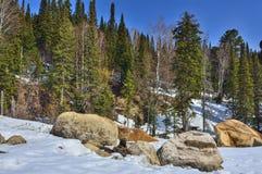 Premier ressort dans la forêt conifére de montagne photographie stock