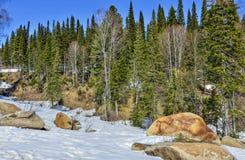 Premier ressort dans la forêt conifére de montagne images stock