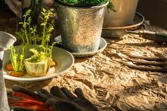 Premier ressort plantant, transplantant, un arrangement nostalgique rustique images libres de droits