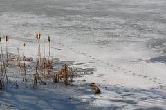 Premier ressort sur le lac Photo libre de droits