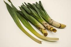 Premier ressort utilisé à l'usine de nourriture Eremurus, coupe sans tubercules avec de jeunes feuilles lanceolate photo libre de droits